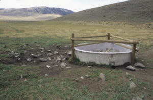 Cow trashed riparian area and spring, Antelpe Basin Beaverhead  Deerlodge NF, Montana