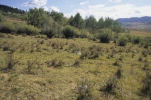 Heavily grazed meadow no hiding cover, Antelope Basin Beaverhead Deerldodge National Forest, Montana
