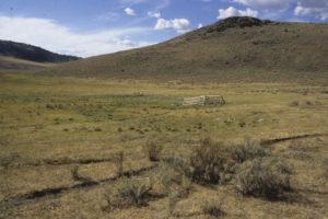 Cow trashed riparian area, Antelope Basin Beaverhead  Deerlodge NF, Montana
