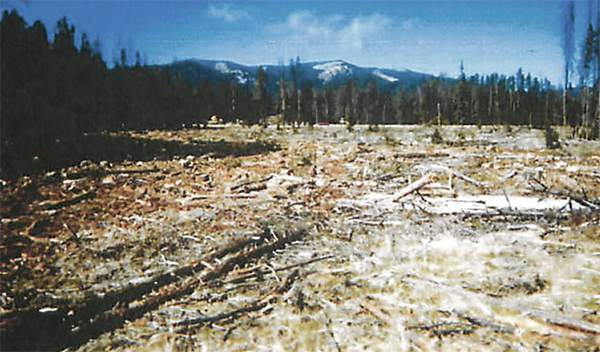Judge Halts Beaverhead Deerlodge Timber Project