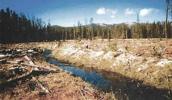 Conservation groups sue Forest Service over secret clearcut on Beaverhead-Deerlodge National Forest