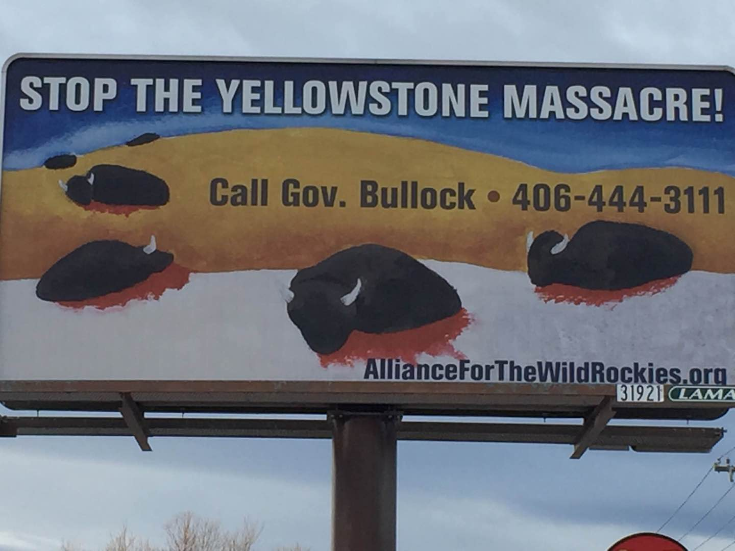 Stop the Yellowstone Massacre of Bison
