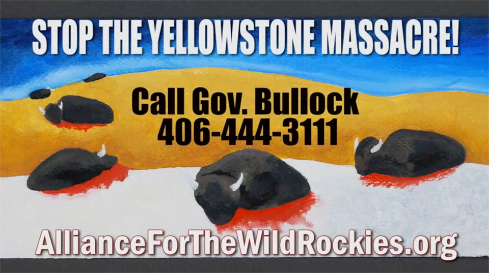 Donate for TV ads to stop yellowstone bison massacre