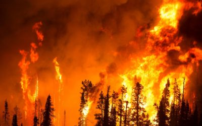 Using wildfires as an excuse to plunder forests