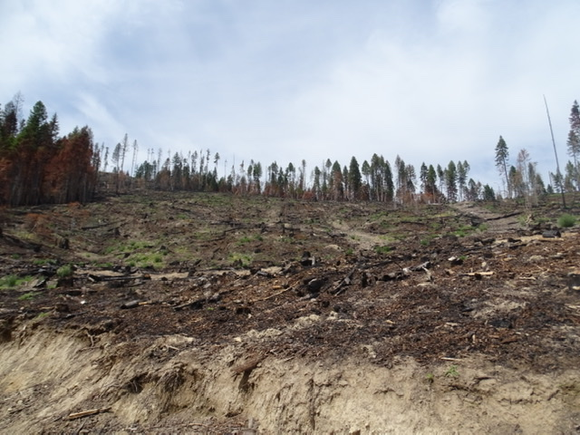 Forest Service not only loses money logging, it makes fires worse