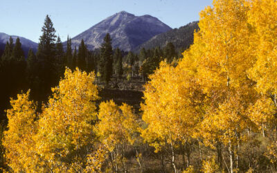 Conservation Victory! Biden administration pulls massive Henry's Fork logging and burning project next to Yellowstone National Park