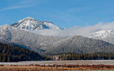 Biden administration a welcome change in forest service plans