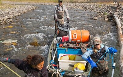 Remove non-native fish without poisoning our streams