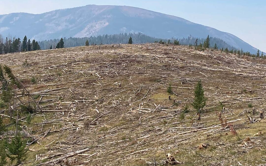 Time to Stop Clearcutting Our National Forests