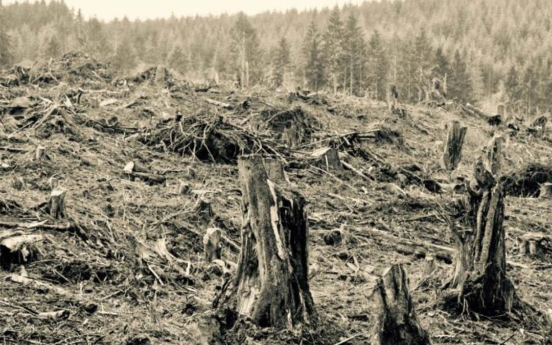 Infrastructure and Budget Bills Contain Very Bad Logging Provisions that Makes Climate Change Worse